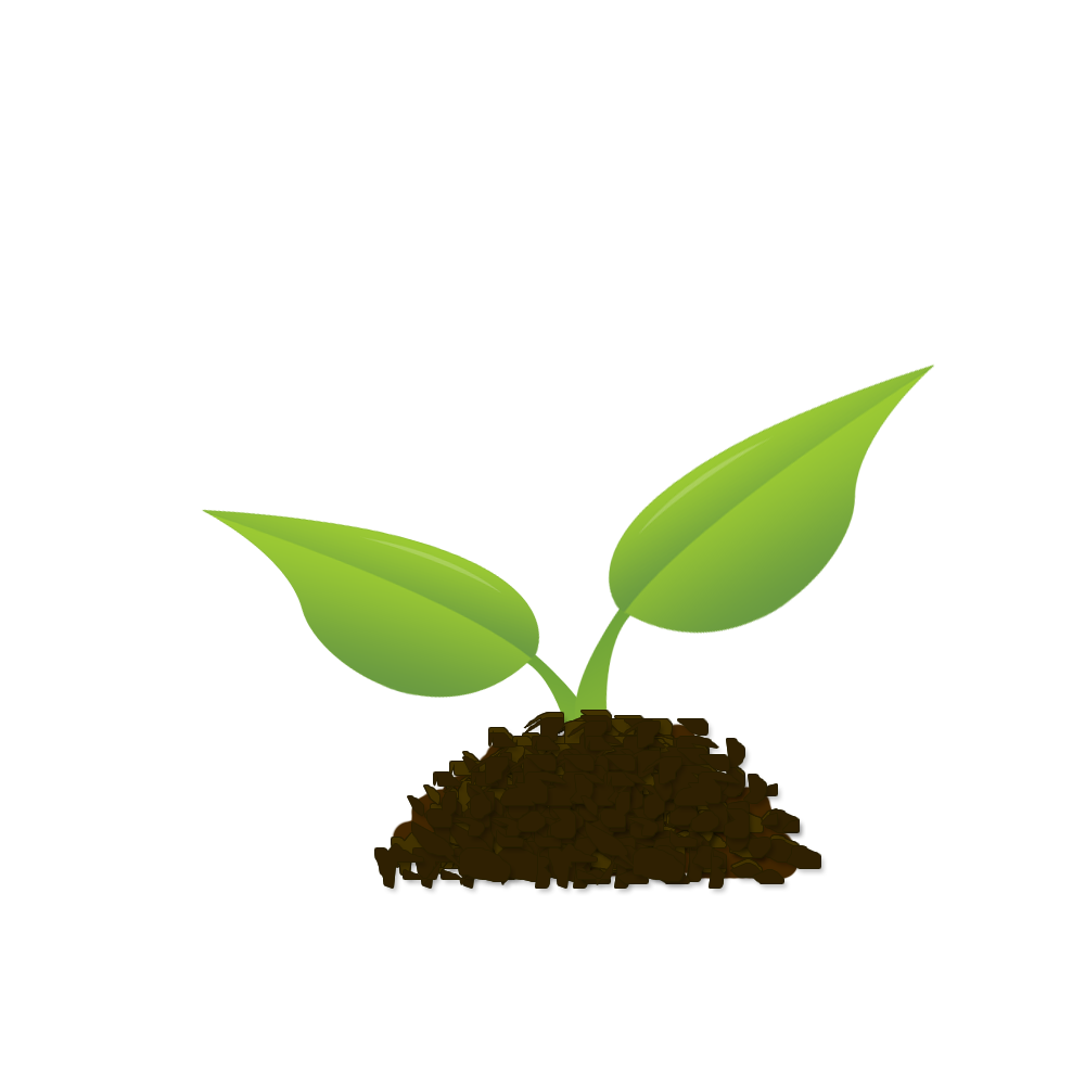 Mighty oaks from little acorns grow - Comprehensive Financial Planning
